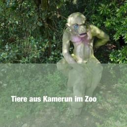 Tiere aus Kamerun im Zoo